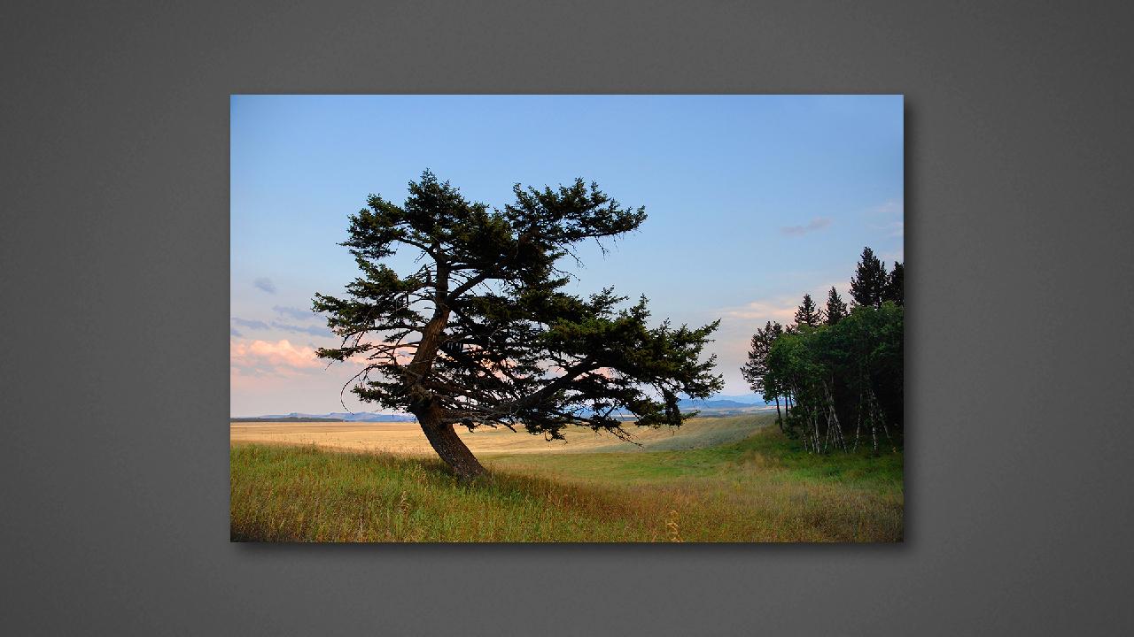 Centurial Tree